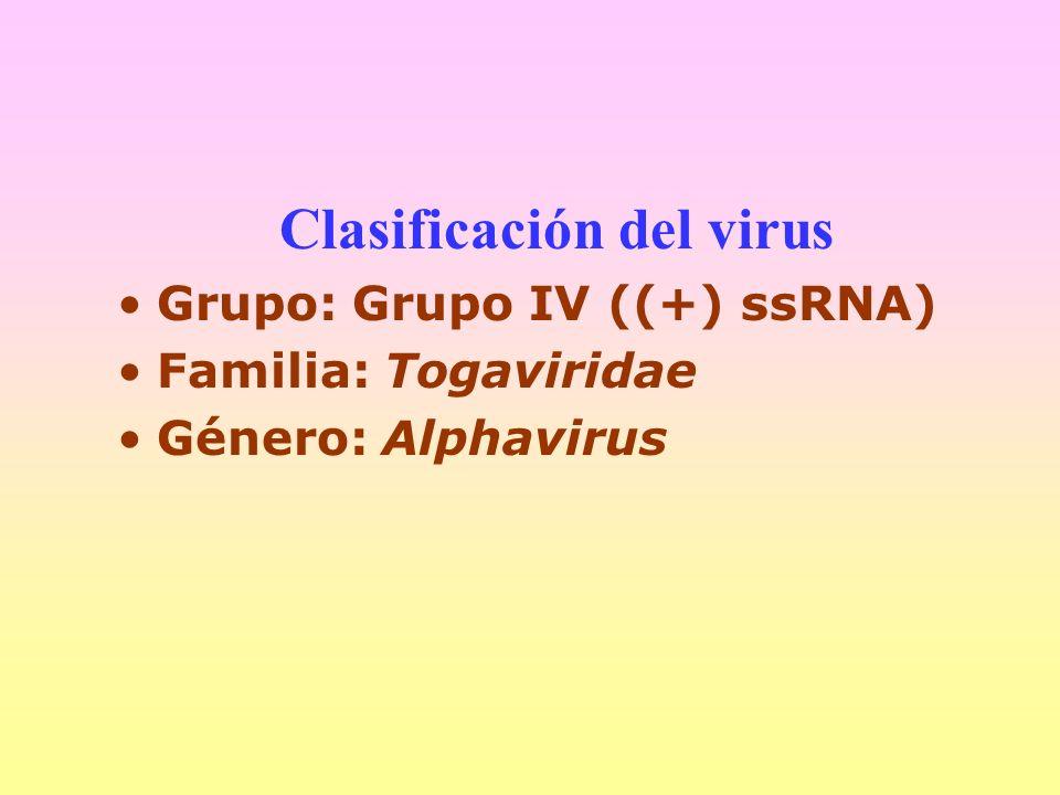 Clasificación del virus