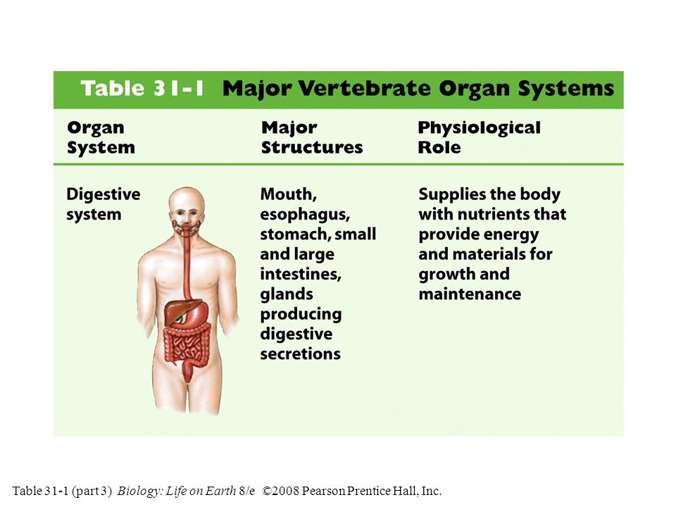 Table 31-1 (part 3) Major Vertebrate Organ Systems