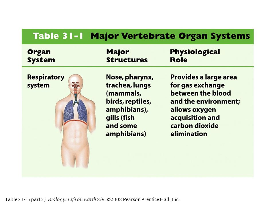Table 31-1 (part 5) Major Vertebrate Organ Systems