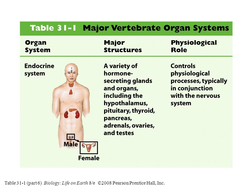 Table 31-1 (part 6) Major Vertebrate Organ Systems