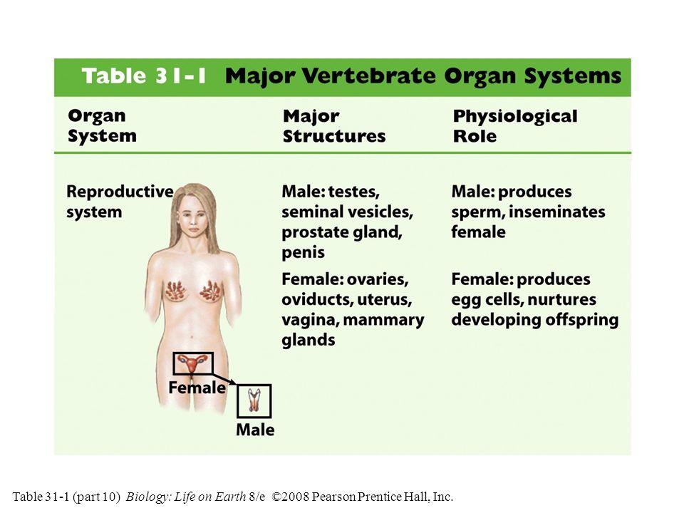 Table 31-1 (part 10) Major Vertebrate Organ Systems