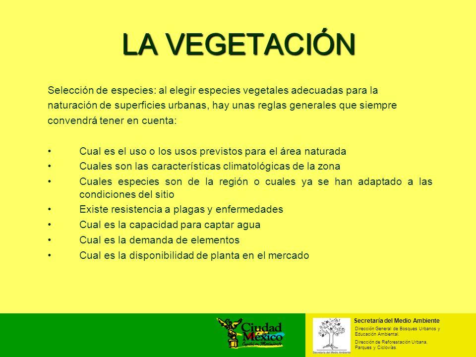 LA VEGETACIÓN Selección de especies: al elegir especies vegetales adecuadas para la.