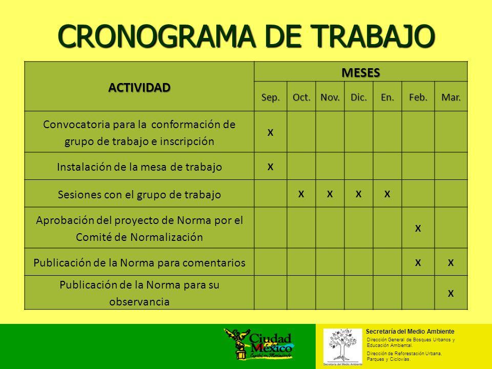 CRONOGRAMA DE TRABAJO ACTIVIDAD MESES