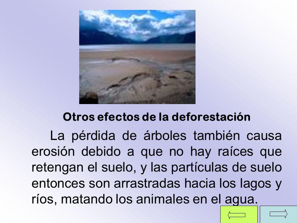 Otros efectos de la deforestación