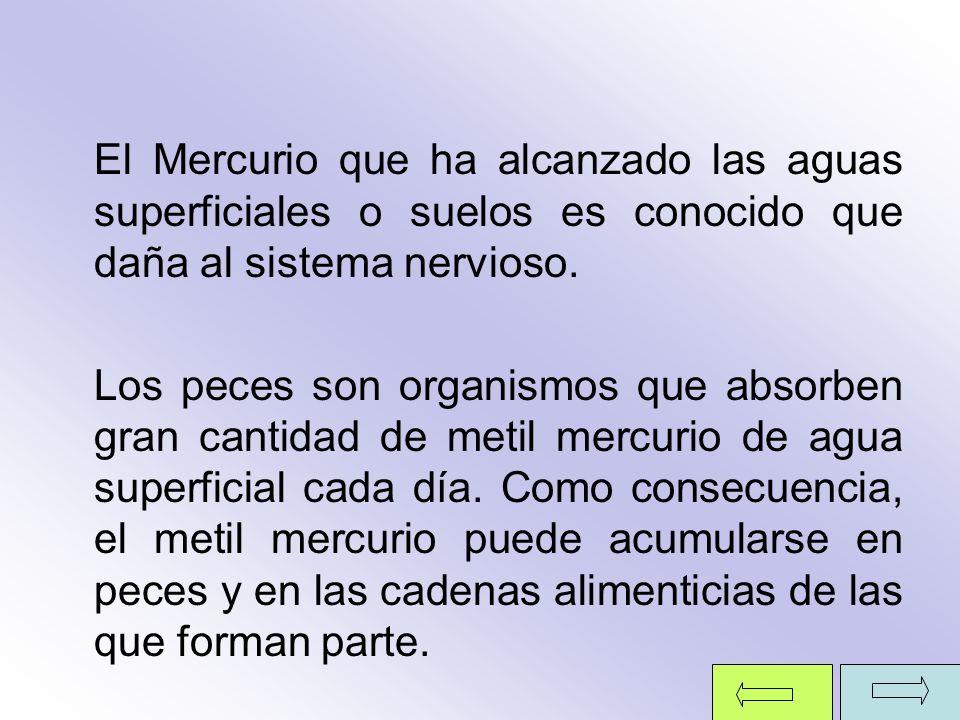 El Mercurio que ha alcanzado las aguas superficiales o suelos es conocido que daña al sistema nervioso.