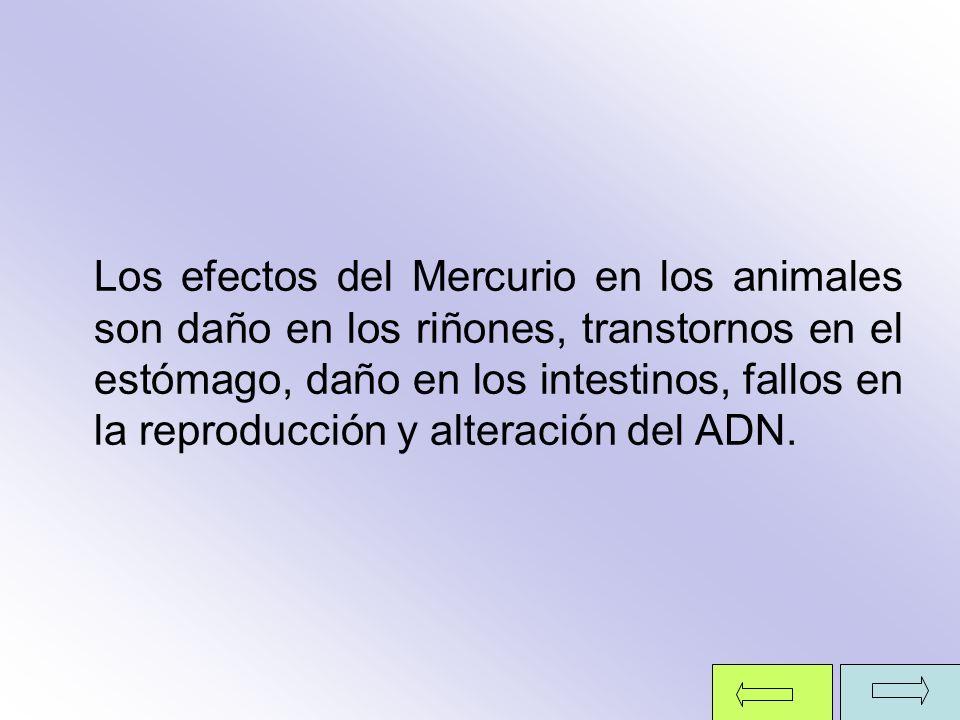 Los efectos del Mercurio en los animales son daño en los riñones, transtornos en el estómago, daño en los intestinos, fallos en la reproducción y alteración del ADN.