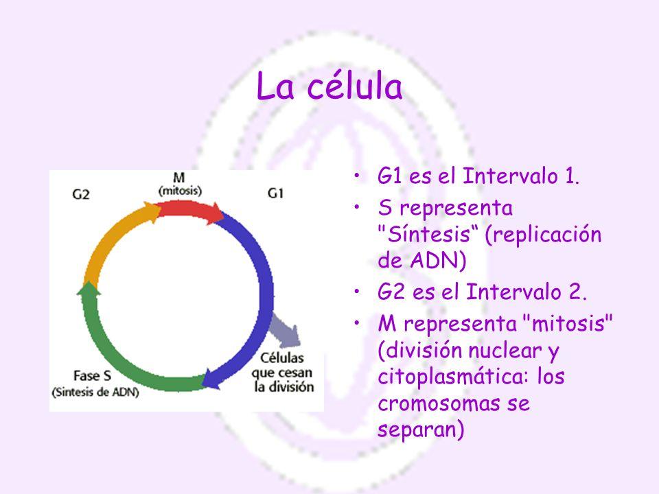 La célula G1 es el Intervalo 1.
