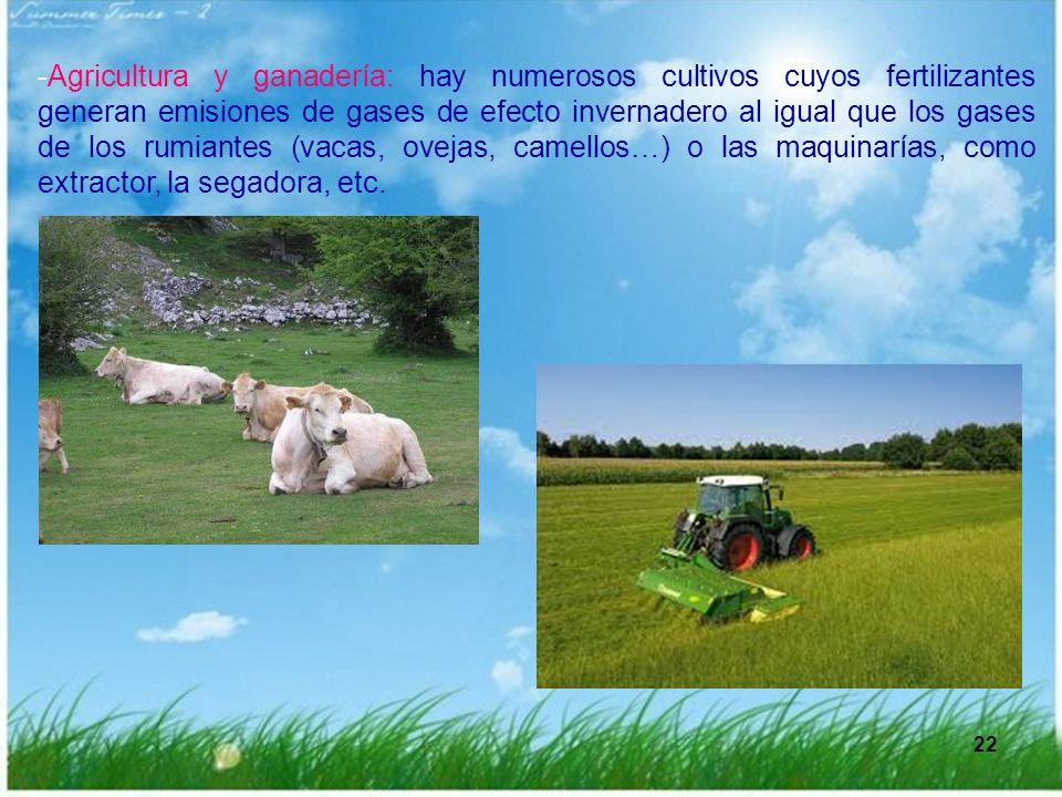 -Agricultura y ganadería: hay numerosos cultivos cuyos fertilizantes generan emisiones de gases de efecto invernadero al igual que los gases de los rumiantes (vacas, ovejas, camellos…) o las maquinarías, como extractor, la segadora, etc.