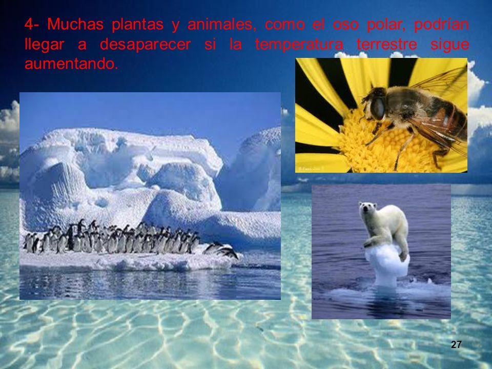 4- Muchas plantas y animales, como el oso polar, podrían llegar a desaparecer si la temperatura terrestre sigue aumentando.