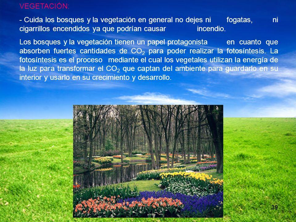 VEGETACIÓN: - Cuida los bosques y la vegetación en general no dejes ni fogatas, ni cigarrillos encendidos ya que podrían causar incendio.