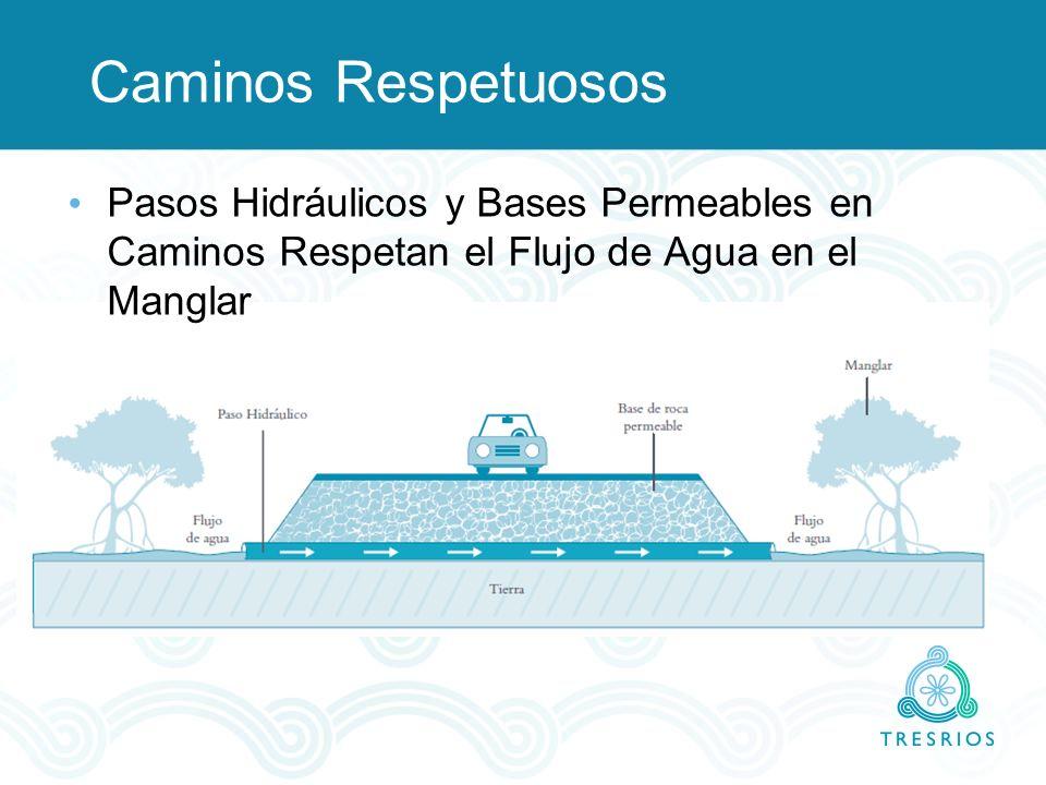 Caminos Respetuosos Pasos Hidráulicos y Bases Permeables en Caminos Respetan el Flujo de Agua en el Manglar.