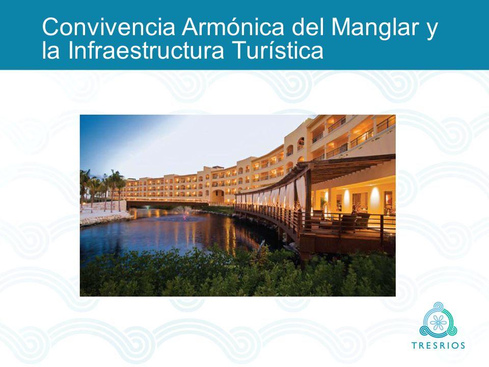 Convivencia Armónica del Manglar y la Infraestructura Turística