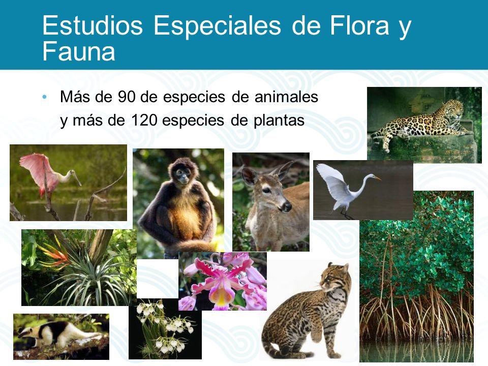 Estudios Especiales de Flora y Fauna