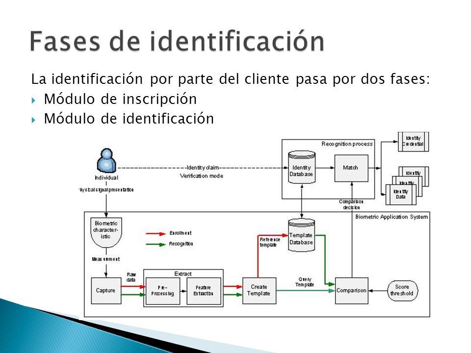 Fases de identificación