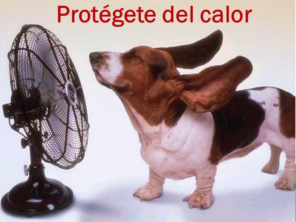 Protégete del calor