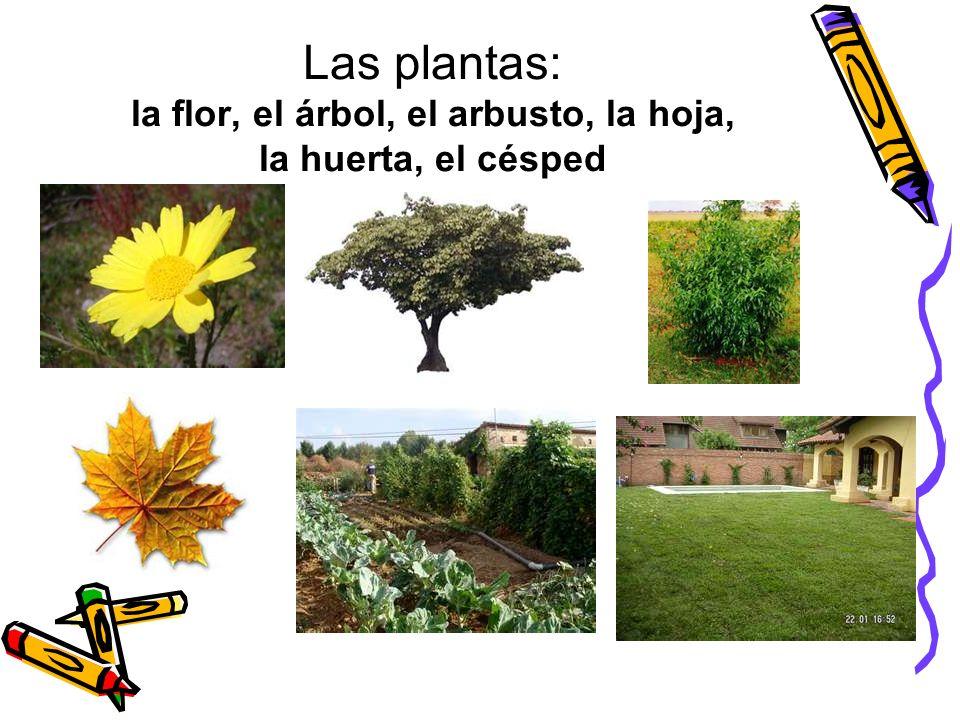 Las plantas: la flor, el árbol, el arbusto, la hoja, la huerta, el césped