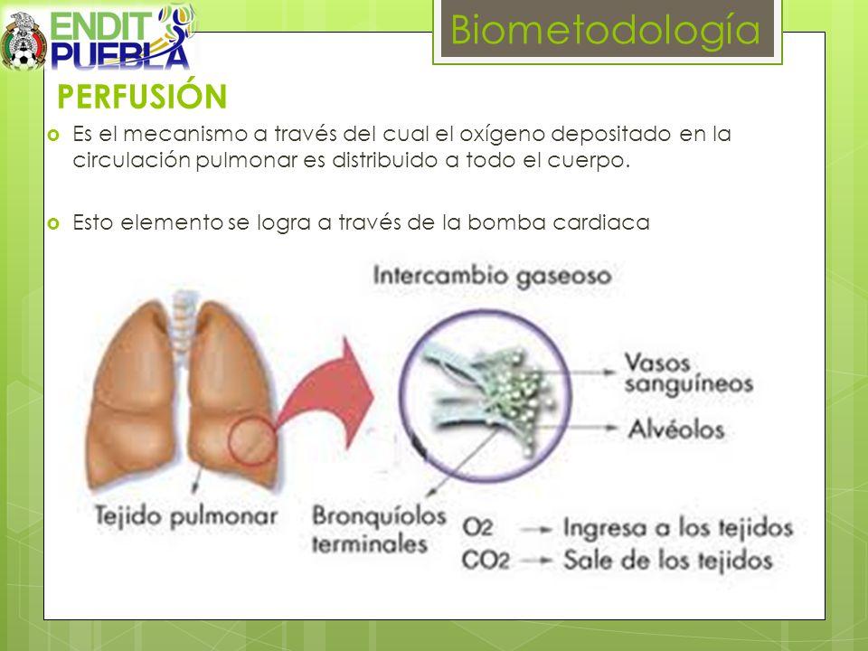Biometodología PERFUSIÓN