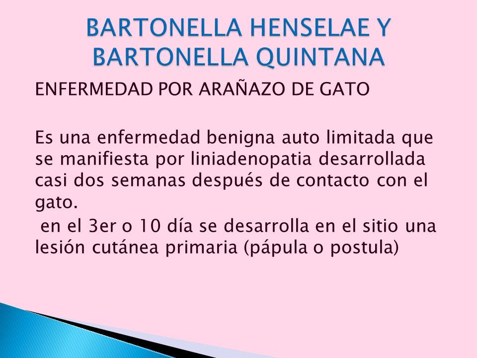 BARTONELLA HENSELAE Y BARTONELLA QUINTANA