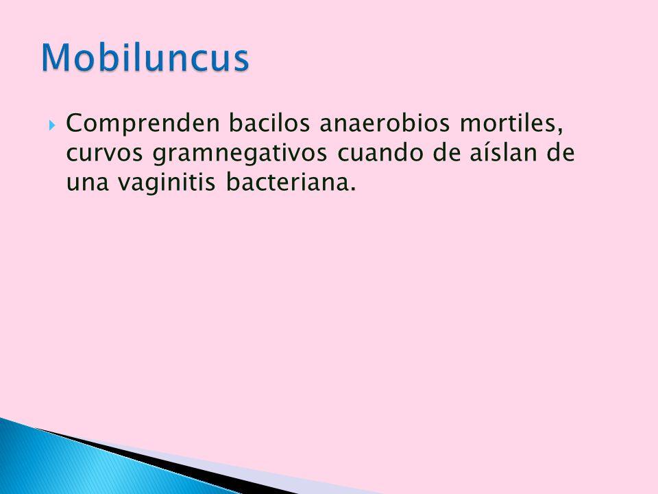 Mobiluncus Comprenden bacilos anaerobios mortiles, curvos gramnegativos cuando de aíslan de una vaginitis bacteriana.