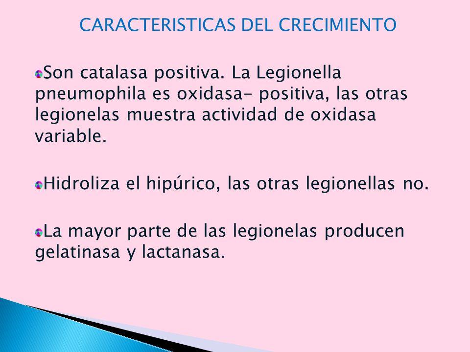 CARACTERISTICAS DEL CRECIMIENTO