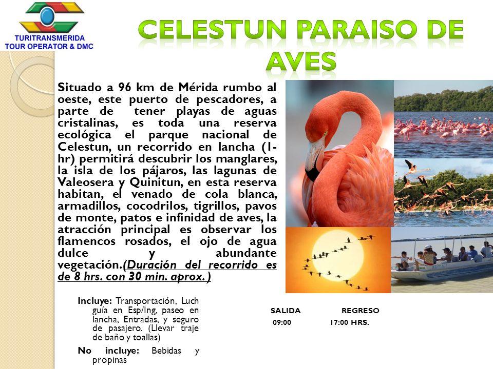 Celestun PARAISO DE AVES