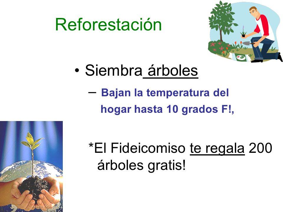 Reforestación Siembra árboles Bajan la temperatura del