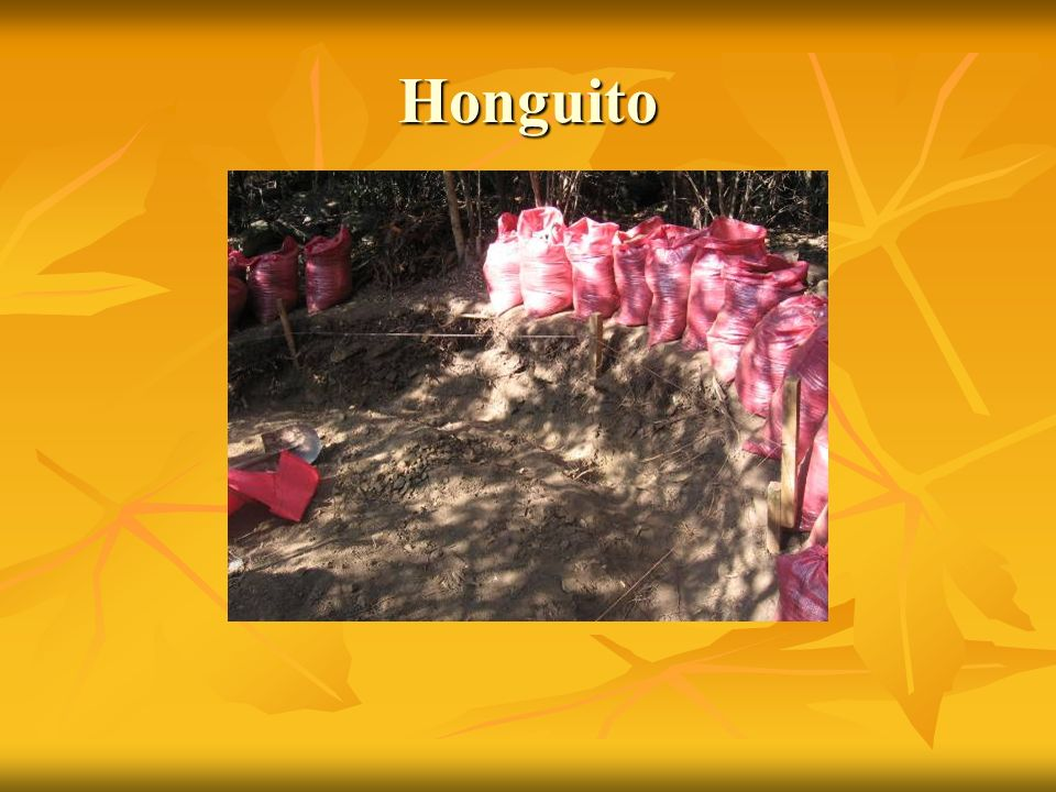 Honguito