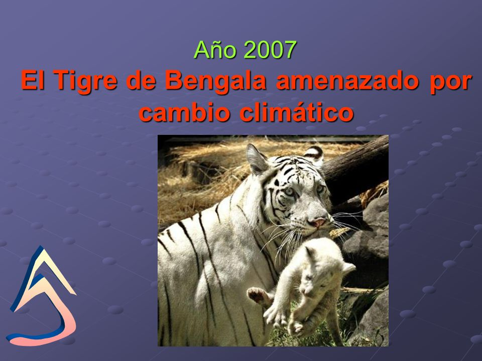 Año 2007 El Tigre de Bengala amenazado por cambio climático