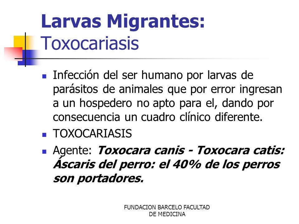 Larvas Migrantes: Toxocariasis