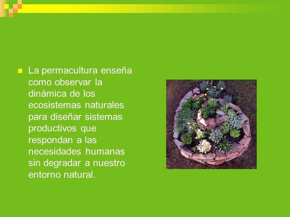 La permacultura enseña como observar la dinámica de los ecosistemas naturales para diseñar sistemas productivos que respondan a las necesidades humanas sin degradar a nuestro entorno natural.