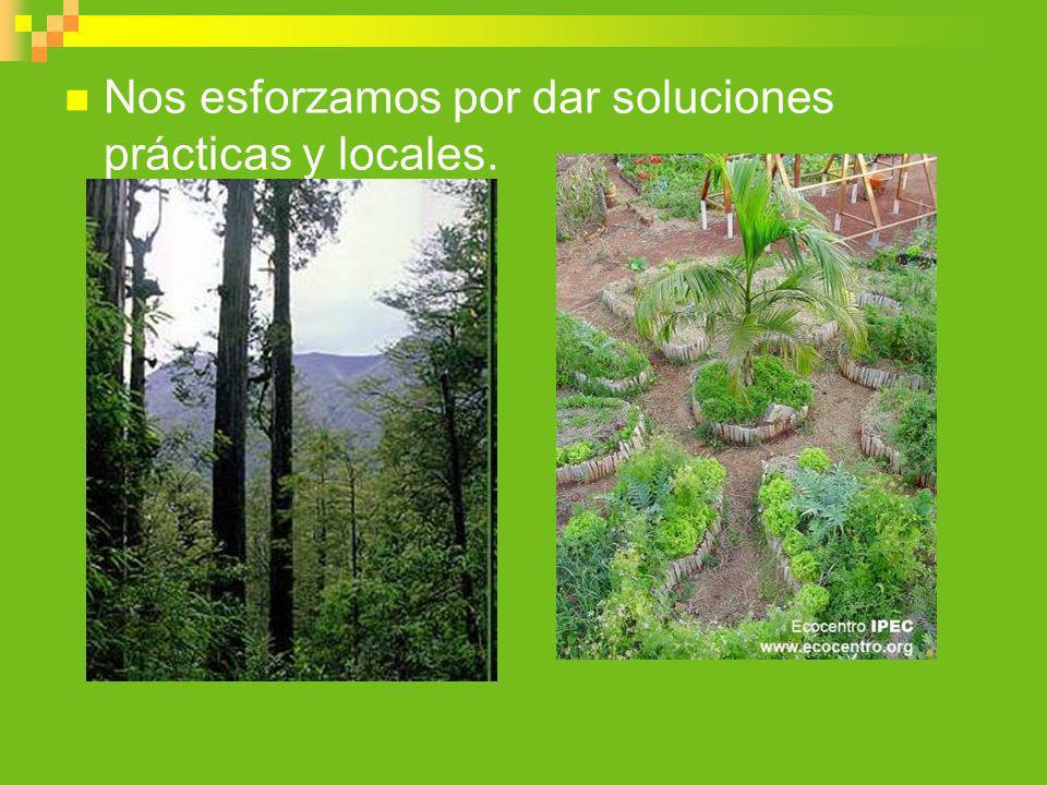 Nos esforzamos por dar soluciones prácticas y locales.