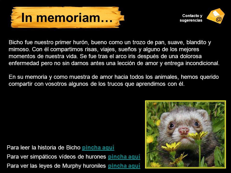 In memoriam… Contacto y sugerencias.