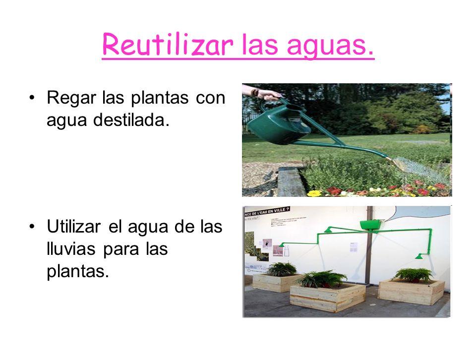 Reutilizar las aguas. Regar las plantas con agua destilada.