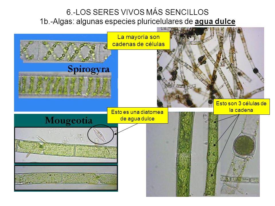 6. -LOS SERES VIVOS MÁS SENCILLOS 1b