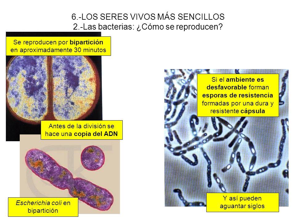 6. -LOS SERES VIVOS MÁS SENCILLOS 2