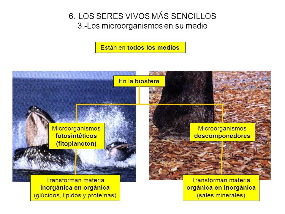 6.-LOS SERES VIVOS MÁS SENCILLOS 3.-Los microorganismos en su medio
