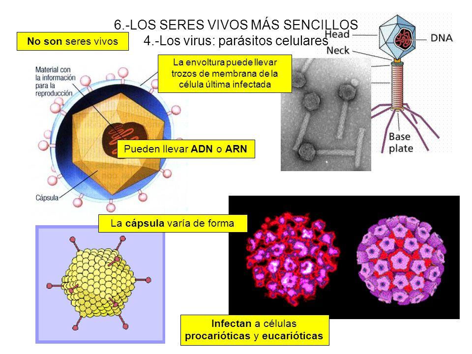 6.-LOS SERES VIVOS MÁS SENCILLOS 4.-Los virus: parásitos celulares