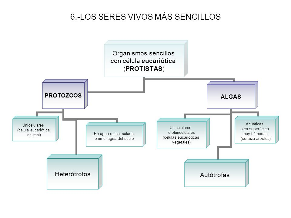 6.-LOS SERES VIVOS MÁS SENCILLOS