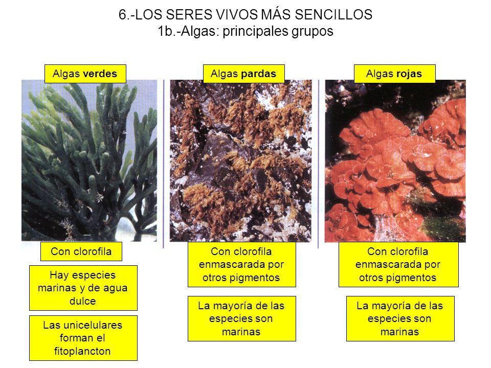 6.-LOS SERES VIVOS MÁS SENCILLOS 1b.-Algas: principales grupos