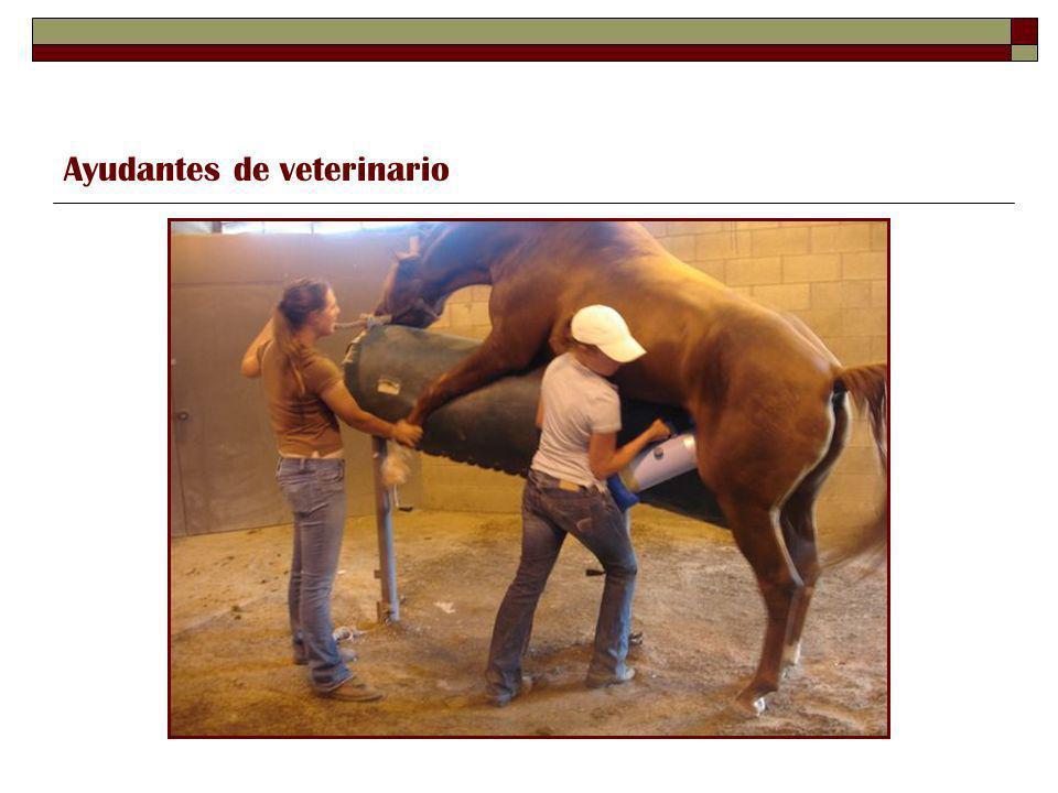 Ayudantes de veterinario