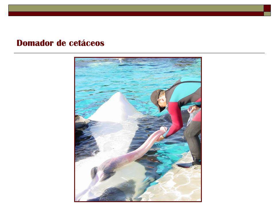 Domador de cetáceos