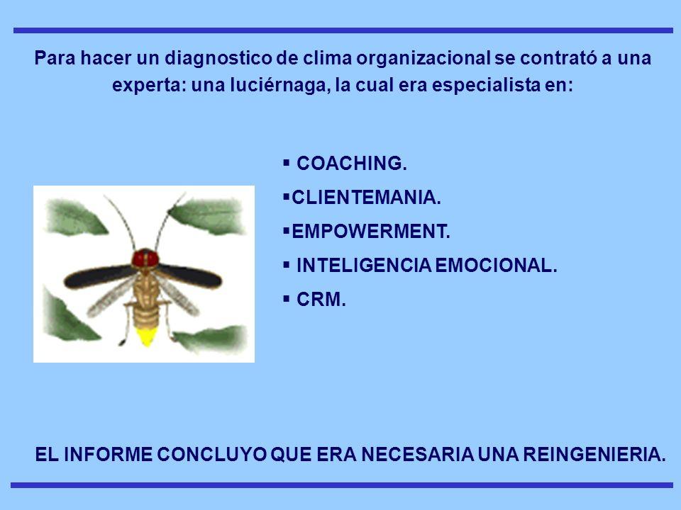 Para hacer un diagnostico de clima organizacional se contrató a una experta: una luciérnaga, la cual era especialista en: