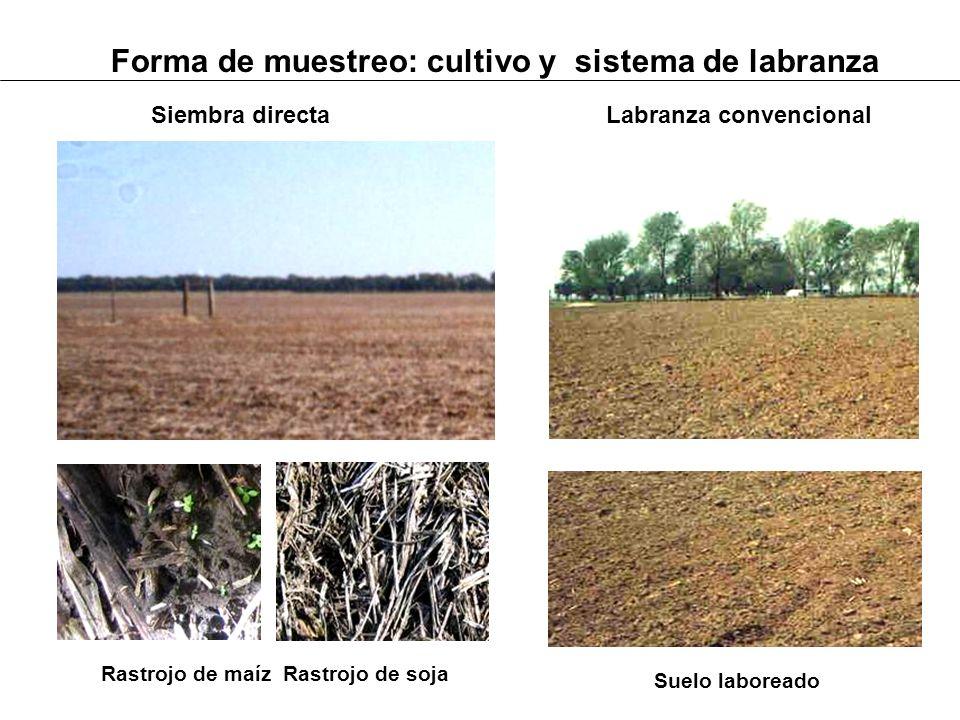 Forma de muestreo: cultivo y sistema de labranza