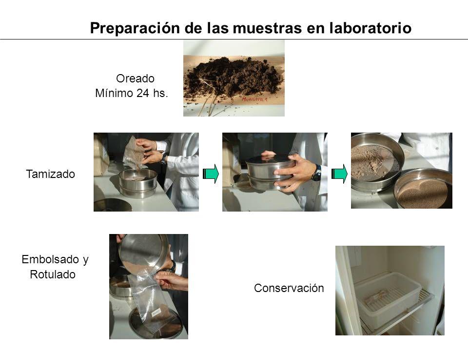 Preparación de las muestras en laboratorio