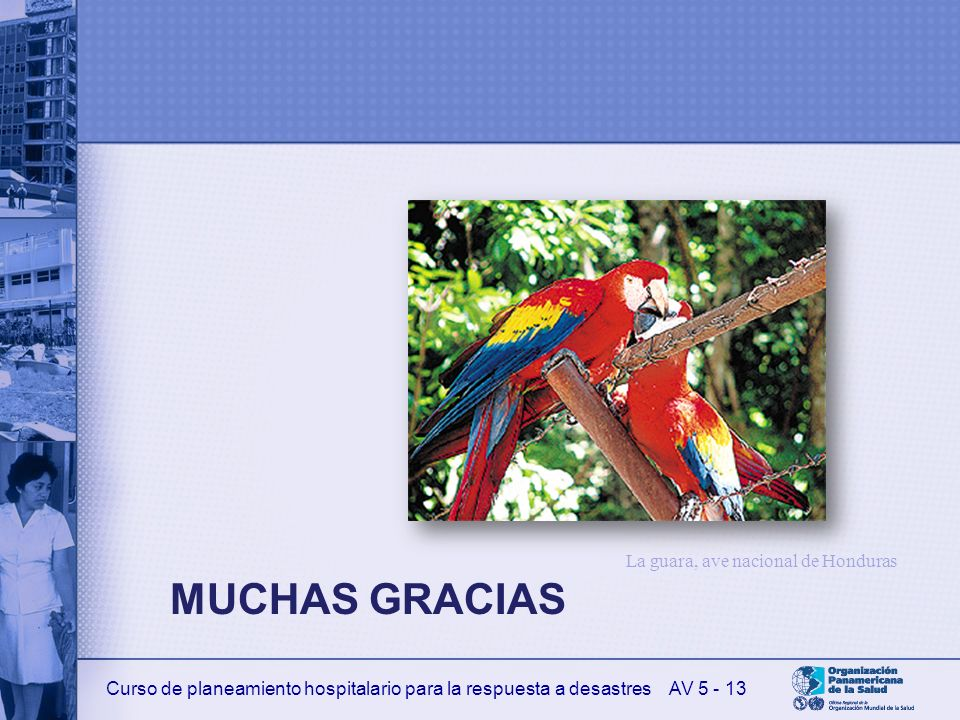 La guara, ave nacional de Honduras