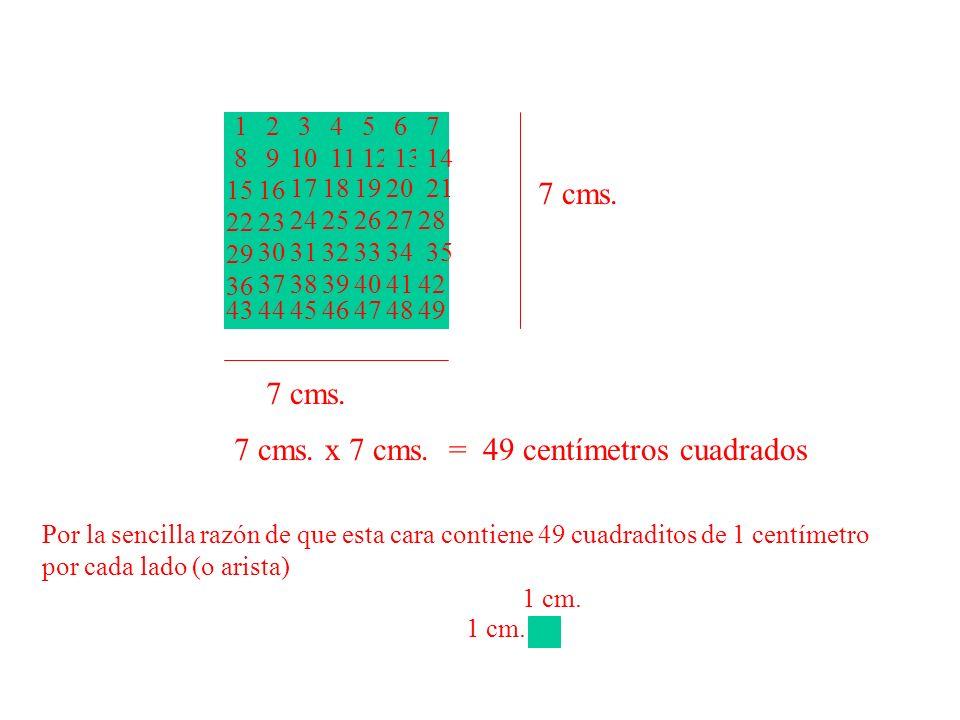 7 cms. x 7 cms. = 49 centímetros cuadrados