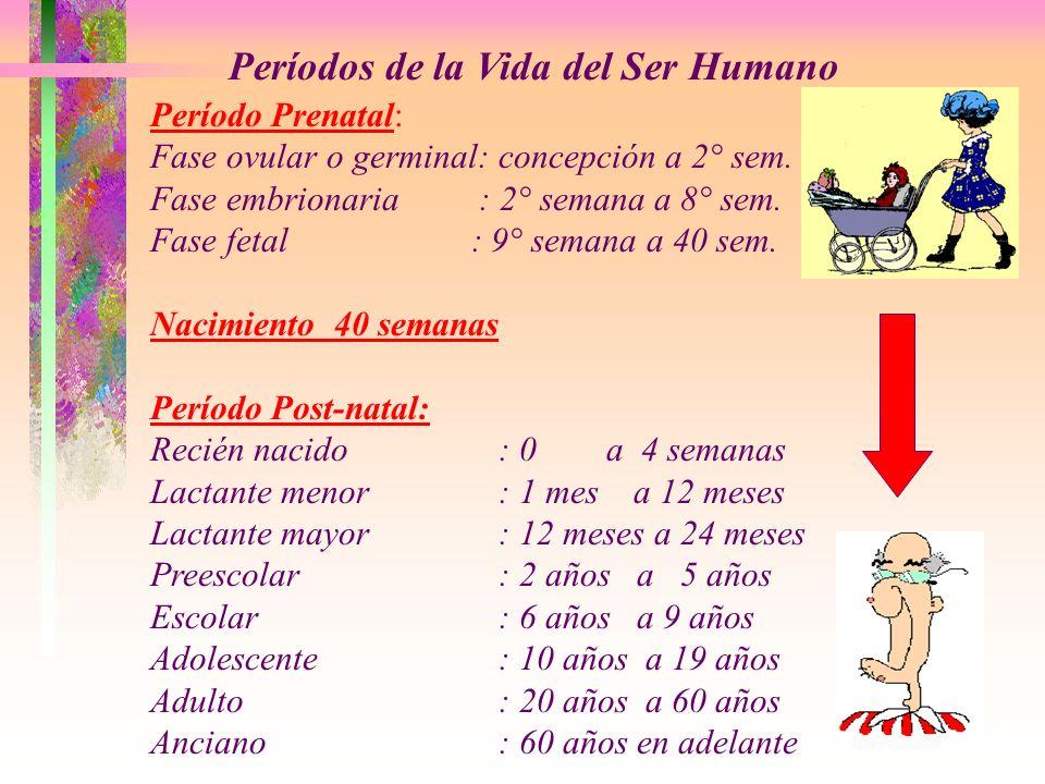Períodos de la Vida del Ser Humano