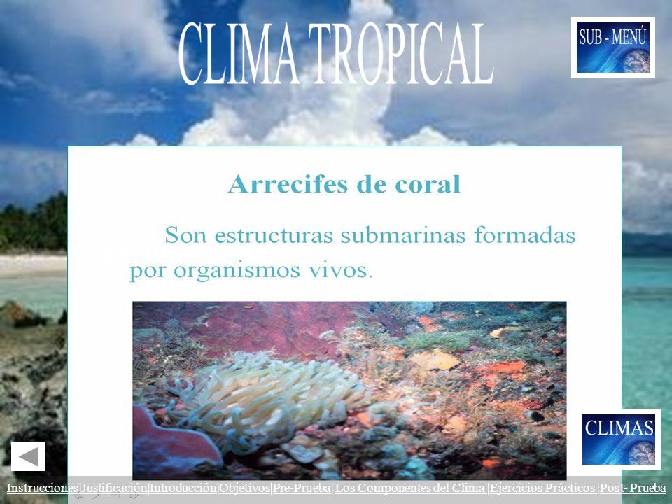 CLIMA TROPICAL Las zonas tropicales del Planeta constituyen la única área en donde se encuentran los.