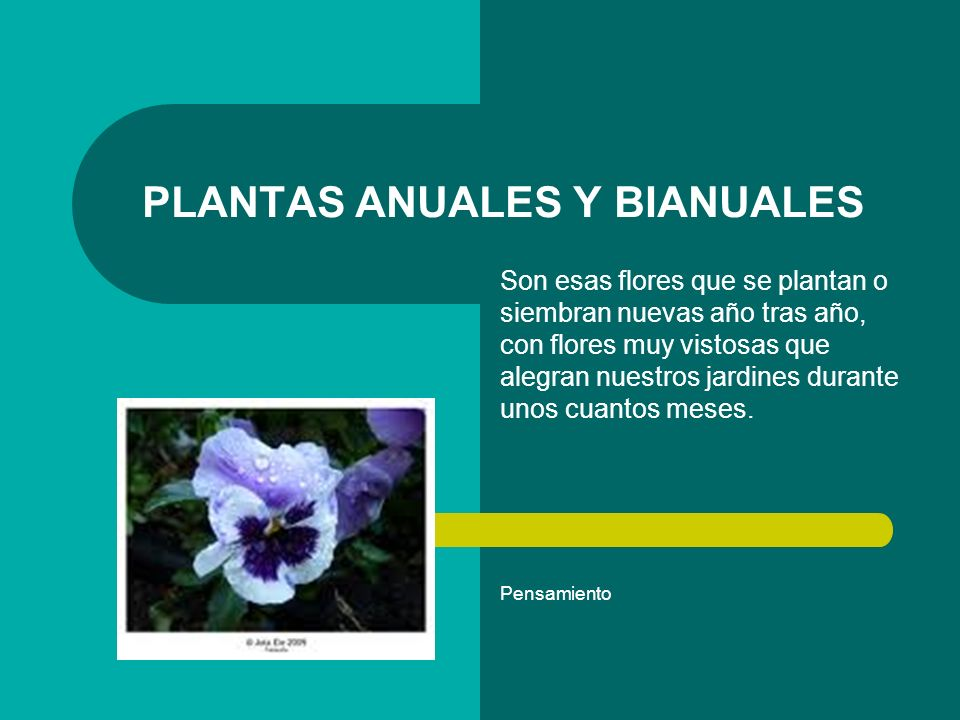 plantas anuales y bianuales ppt video online descargar