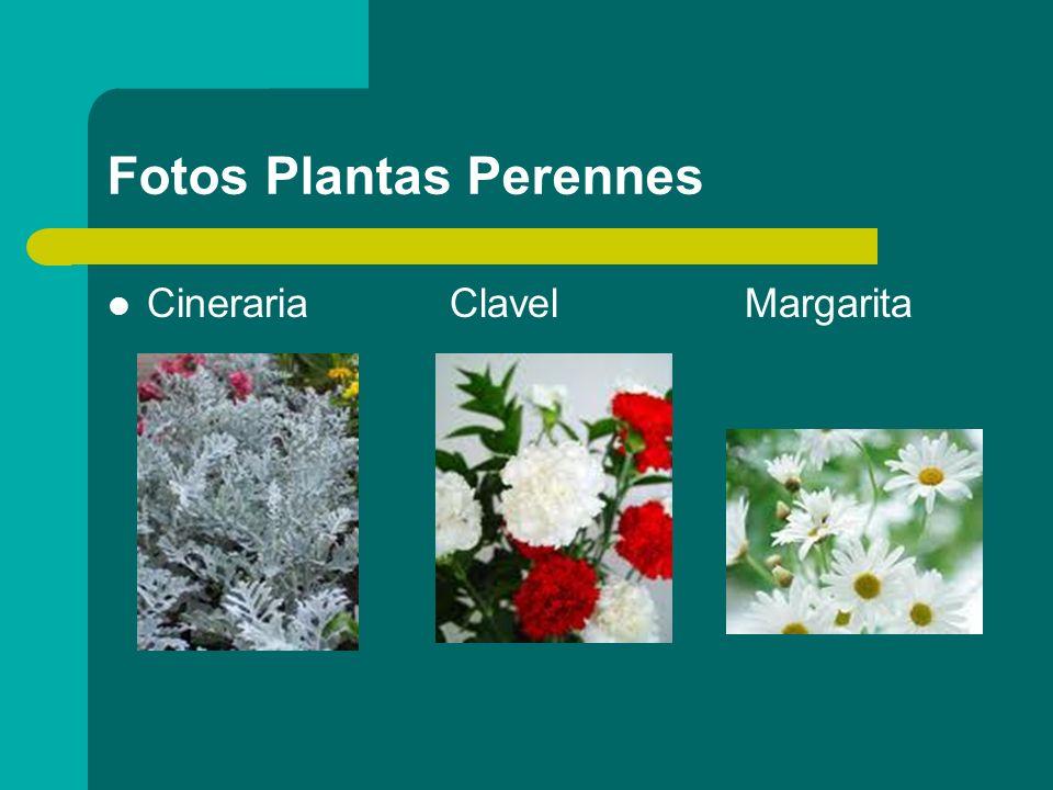Fotos Plantas Perennes